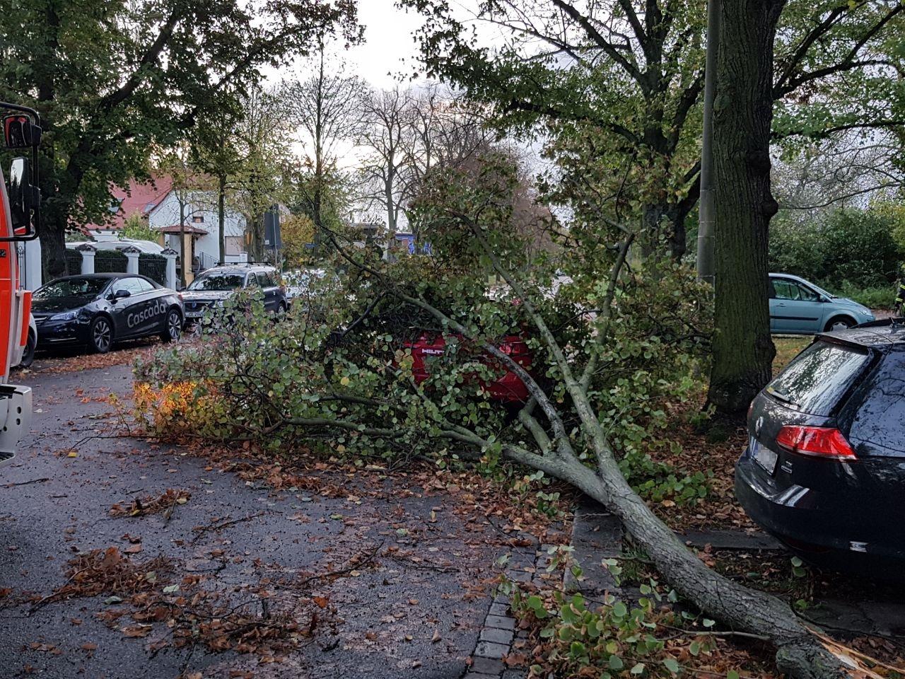 166_TH1_Baum-auf-Straße_01