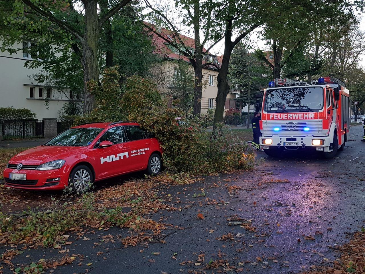 166_TH1_Baum-auf-Straße_02