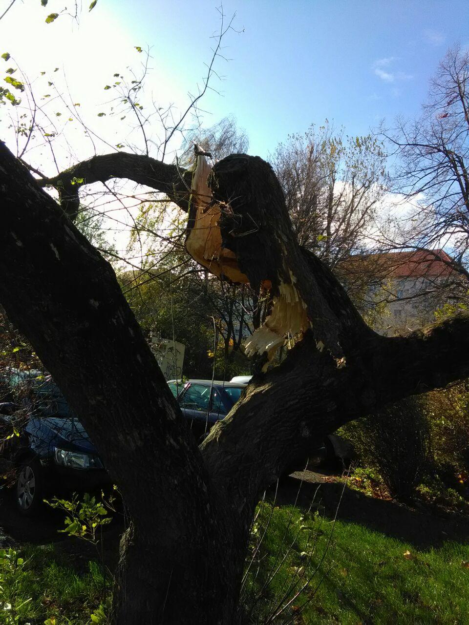 168_TH1_Baum-auf-Pkw