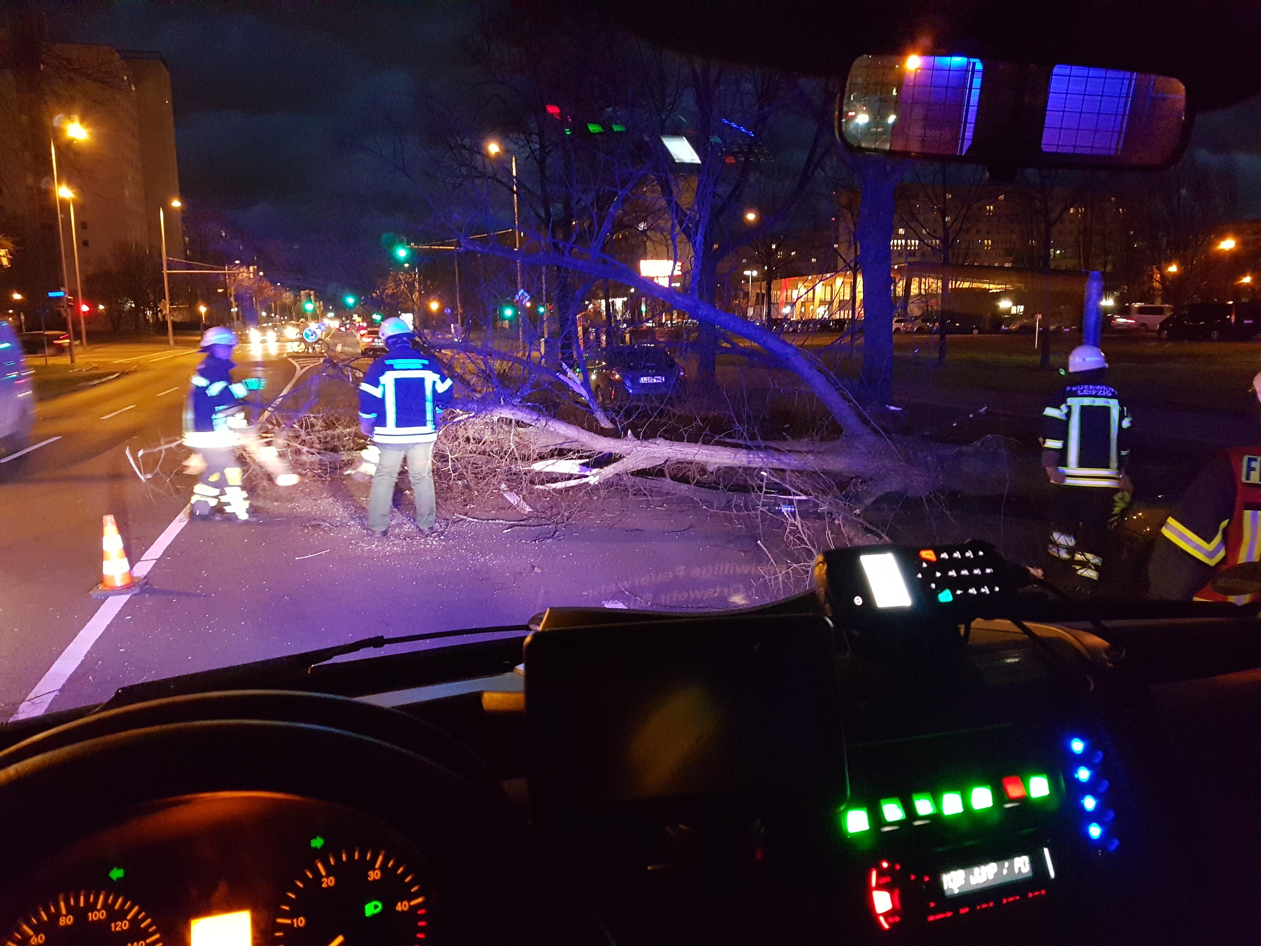 11_TH1_Baum-auf-Straße_01