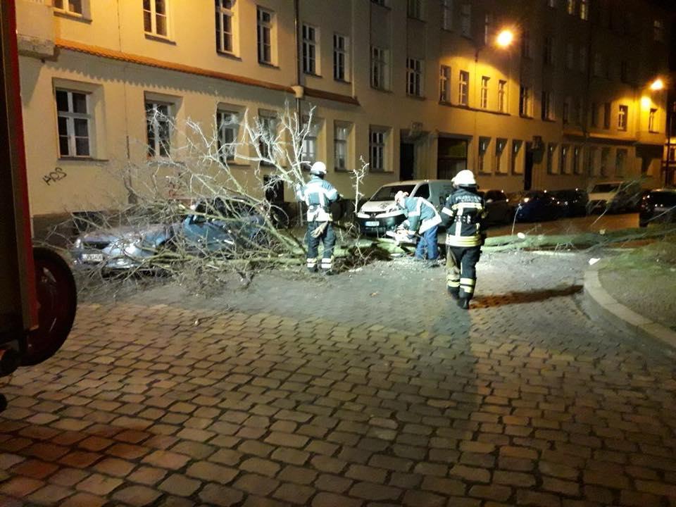 12_TH1_Baum-auf-Straße_01