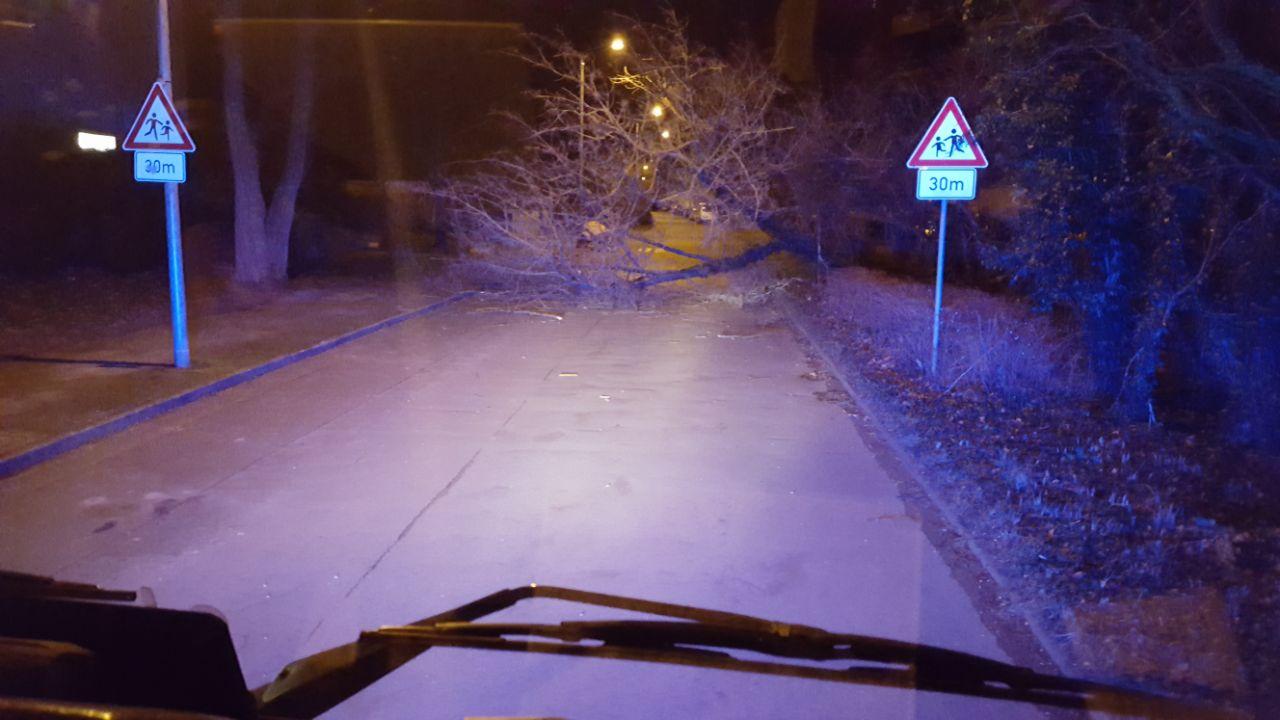 18_TH1_Baum_über-Straße